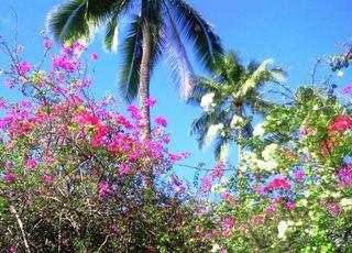 ハワイの花.JPG
