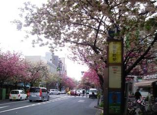桜新町.JPG