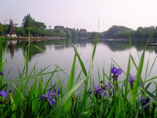 浮間公園.JPG