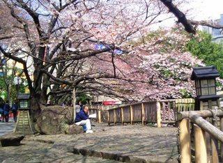 王子の桜.JPG