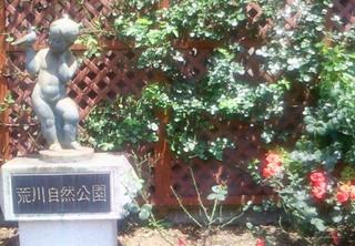 荒川自然公園.JPG